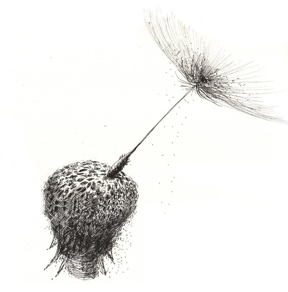 1009x1024 For Our Wall Drawing Drawings, Dandelion