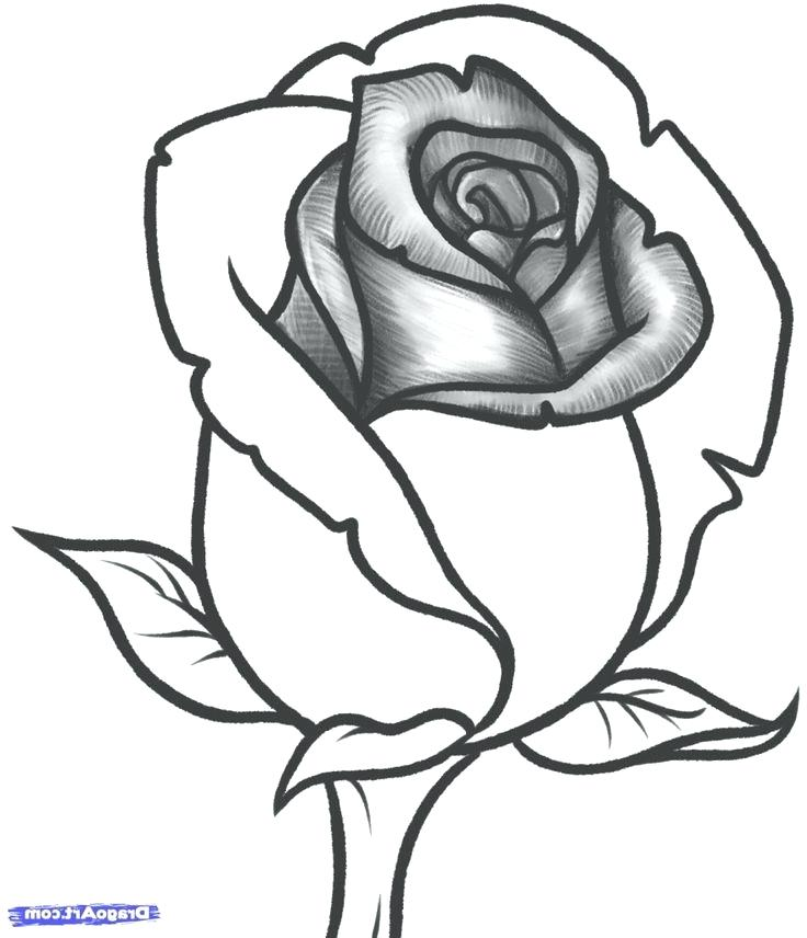 736x856 Rose Drawings