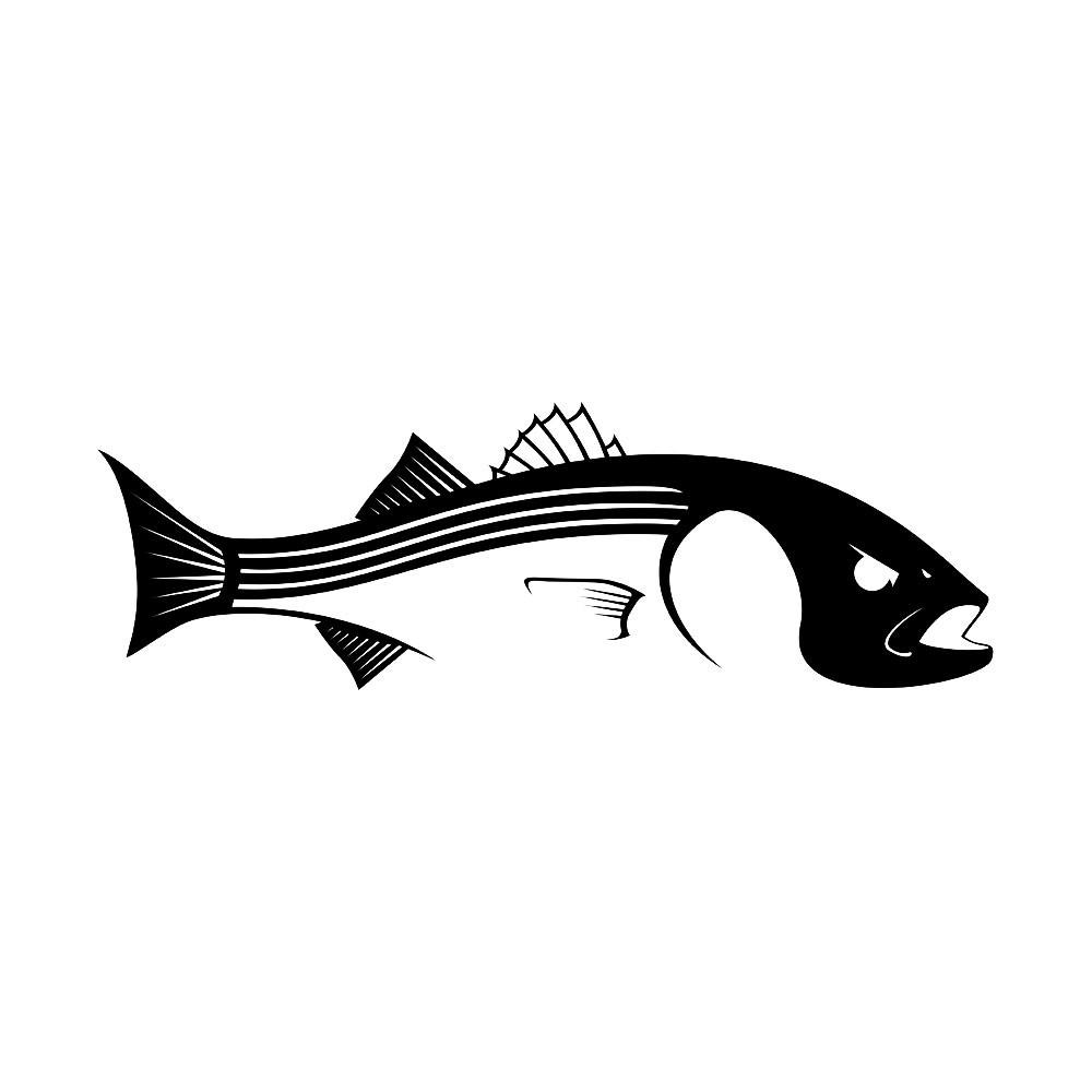 1000x1000 bass drawing striped bass for free download