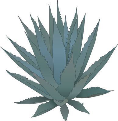 Succulent Drawing | Free download best Succulent Drawing on