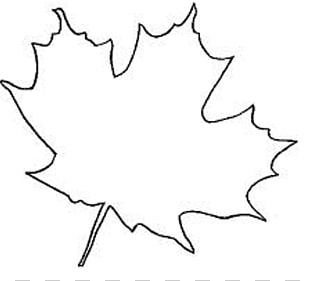 Sugar Maple Leaf Drawing