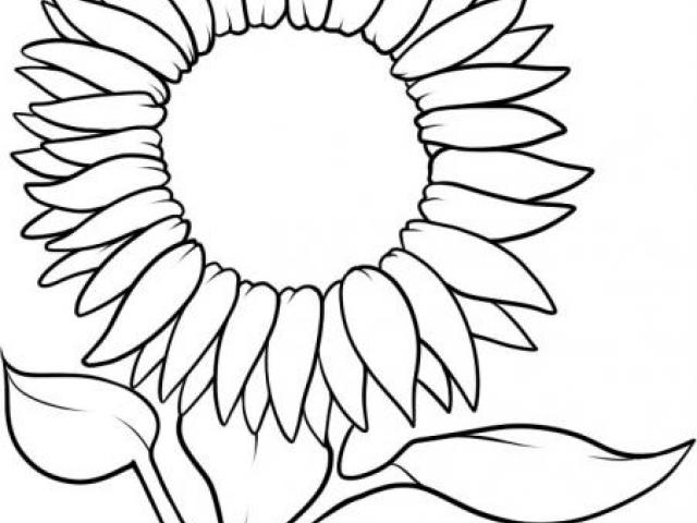 Sunflower Cartoon Drawing   Free download on ClipArtMag