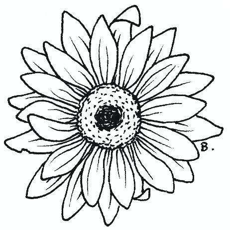 462x462 simple sunflower drawing how to draw a sunflower simple sunflower