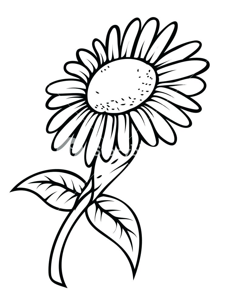 764x1000 sunflower pictures to draw sunflower drawing crown sunflower