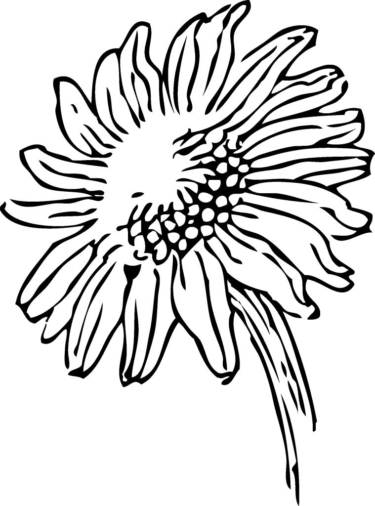 759x1024 sunflower drawings new simple sunflower drawing sunflower is part