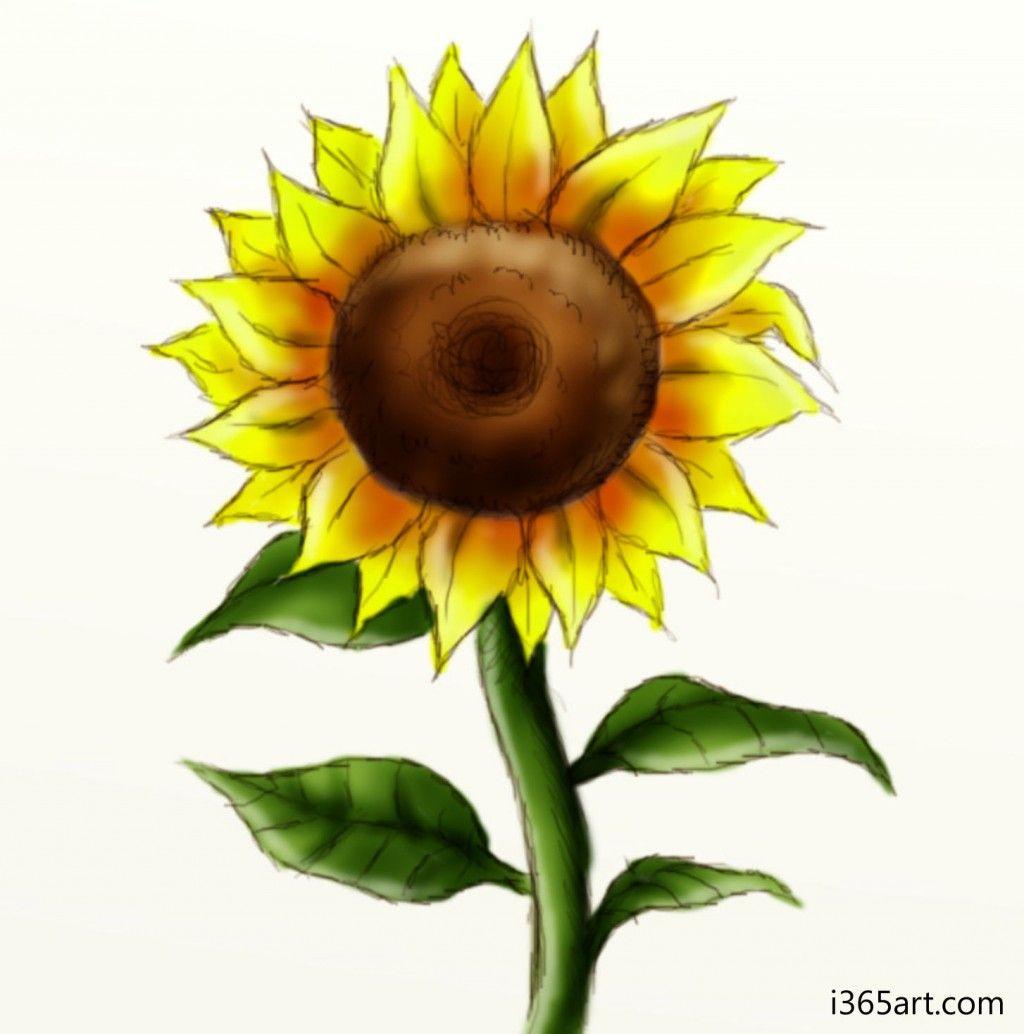 1024x1034 how to draw a sunflower mackenzie sunflower drawing, sunflower