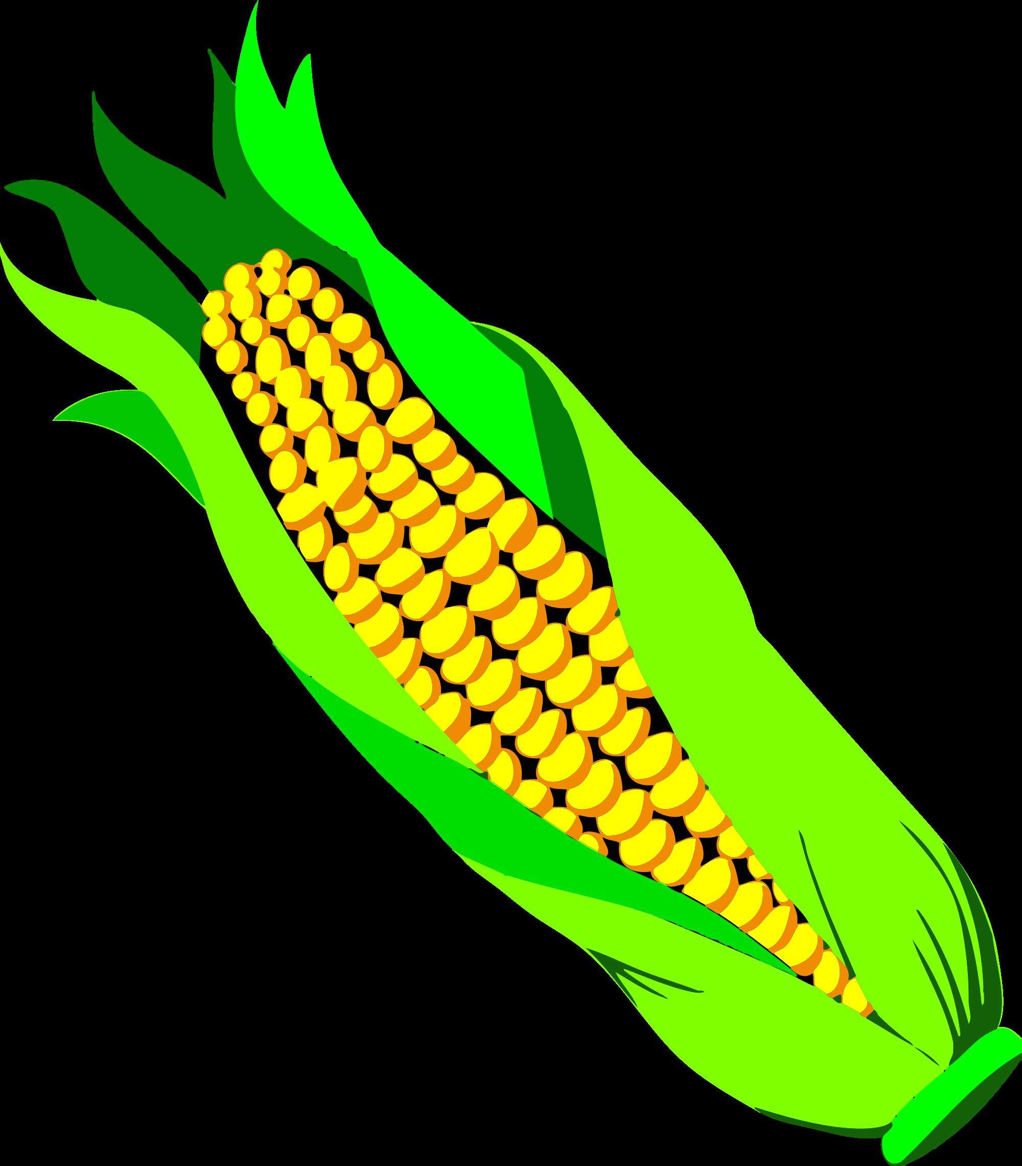 Sweet Corn Drawing