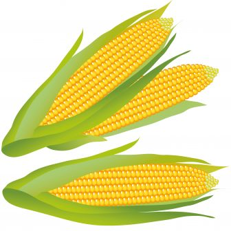 336x336 Cornrows Drawing Corn Field Popcorn Bucket Bits Character