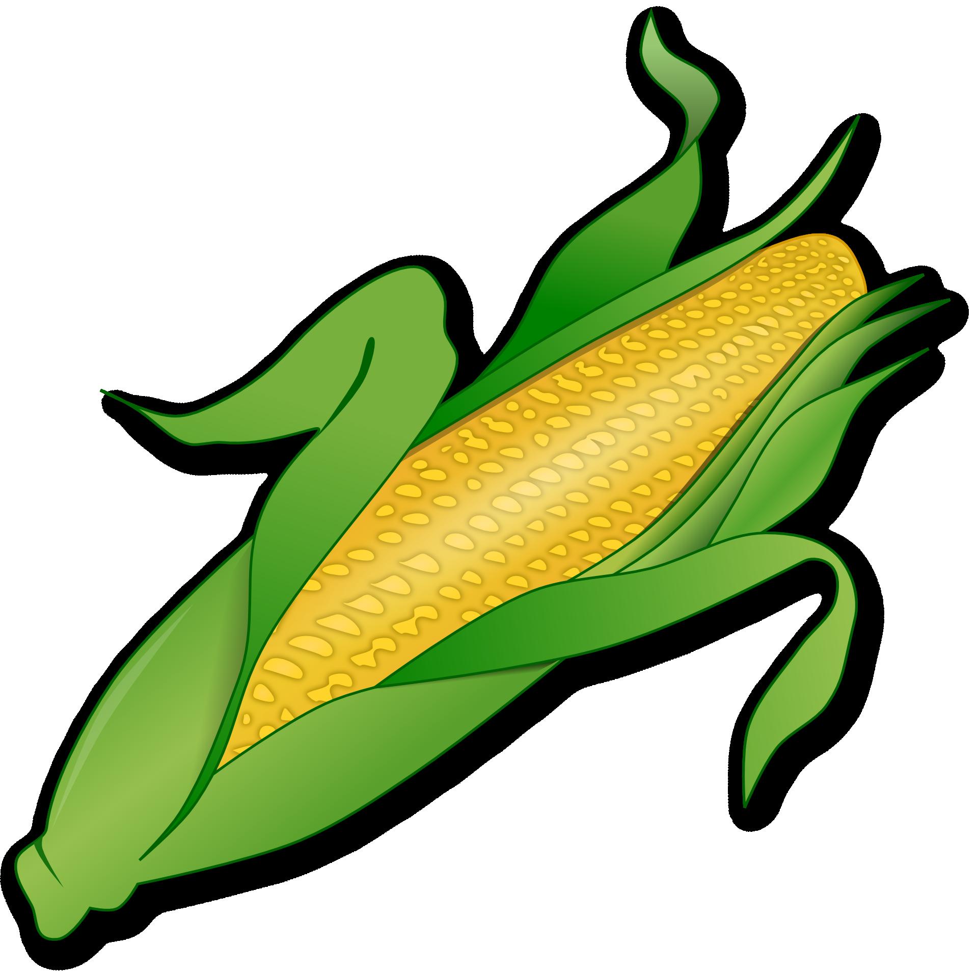 1920x1905 Drawing Of Farm Vegetable Corn Free Image
