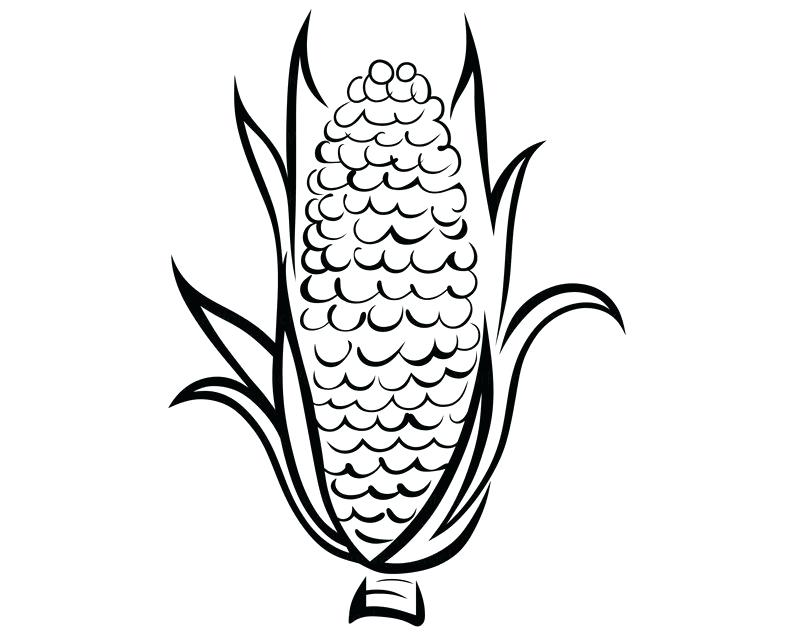 794x635 How To Draw Corn On The Cob C Is For Corn Cob Coloring