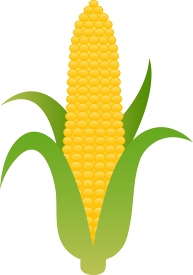 386x550 Large Husk Of Golden Corn Clip Art Yellow Corn, Harvest Corn