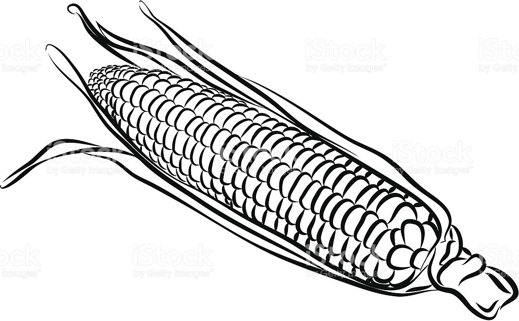 1024x634 Corn Drawing Vector For Free Download