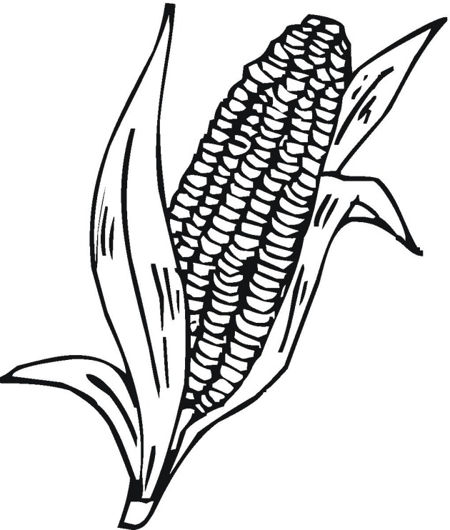 630x742 Sweet Corn Clipart Black And White