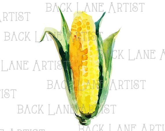 570x452 Vegetable Corn Watercolor Drawing Clipart Lineart Illustration Etsy