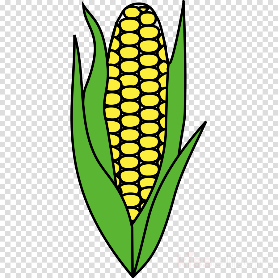 900x900 Corn, Food, Drawing, Transparent Png Image Clipart Free Download