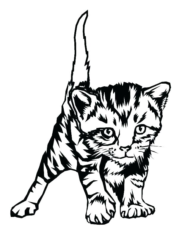 612x793 Tabby Cat Coloring Pages Drawing Free Striped Colouring Flextape