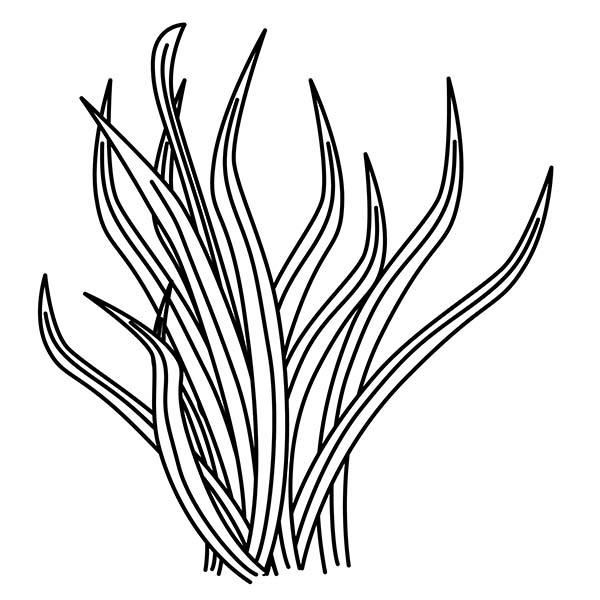 Tall Grass Drawing