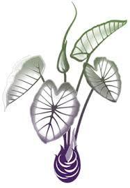187x269 resultado de imagem para taro plant tattoos taro plant, plant
