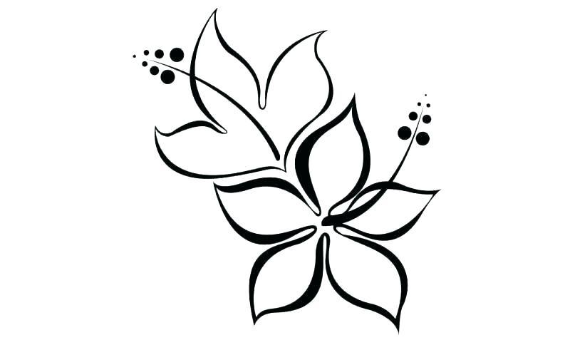 800x491 Hawaiian Flowers Drawing Best Flower Drawing Ideas On Hibiscus