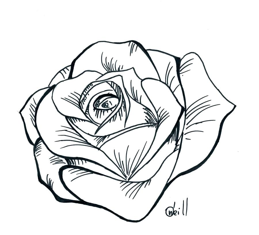 900x817 Simple Line Tattoo Simple Line Drawing Of Rose Bud Stock Vector