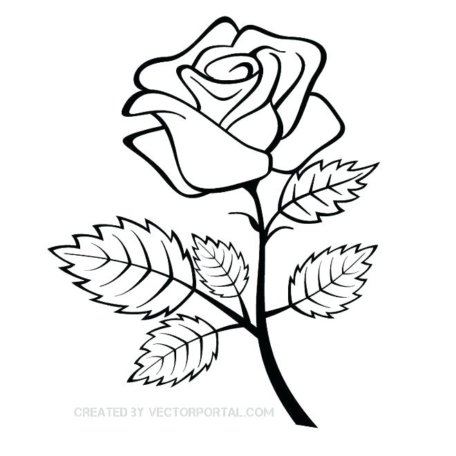 660x660 Simple Rose Outline Easy Roses Drawings Rose Outline With Stem