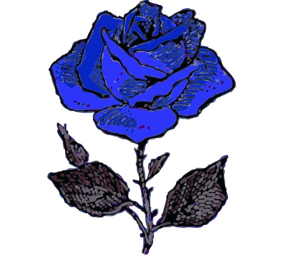 900x820 blue rose drawing blue rose poster best blue rose tattoo designs