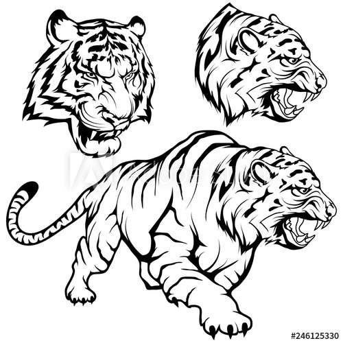 500x500 tiger set suitable as logo or team mascot, tiger drawing sketch