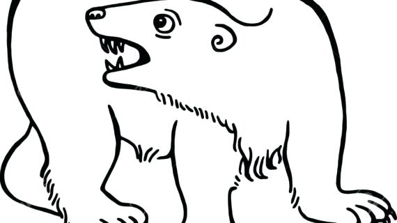 570x320 A Drawing Of A Bear Bear Drawing Step