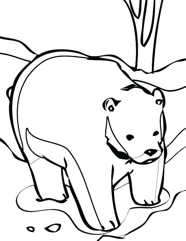 600x776 Cute Bears To Draw