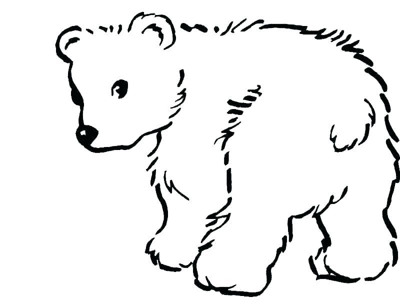 800x600 simple bear drawings polar bear drawings simple polar bear
