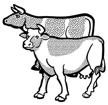 351x340 english longhorn texas longhorn line art hereford cattle drawing