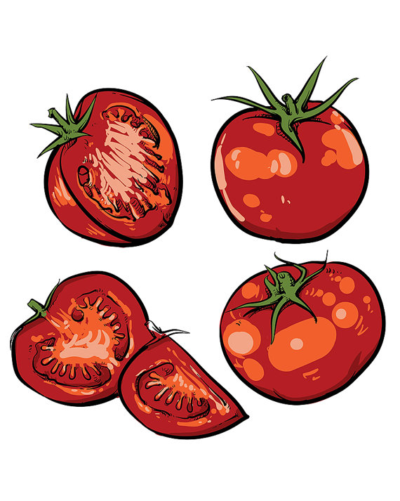 570x713 off sale tomato vector drawing isolated tomato and sliced