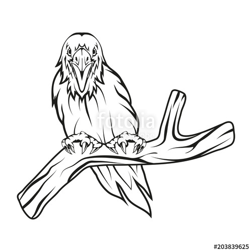 500x500 raven hand drawn raven sketch of raven head vector artwork