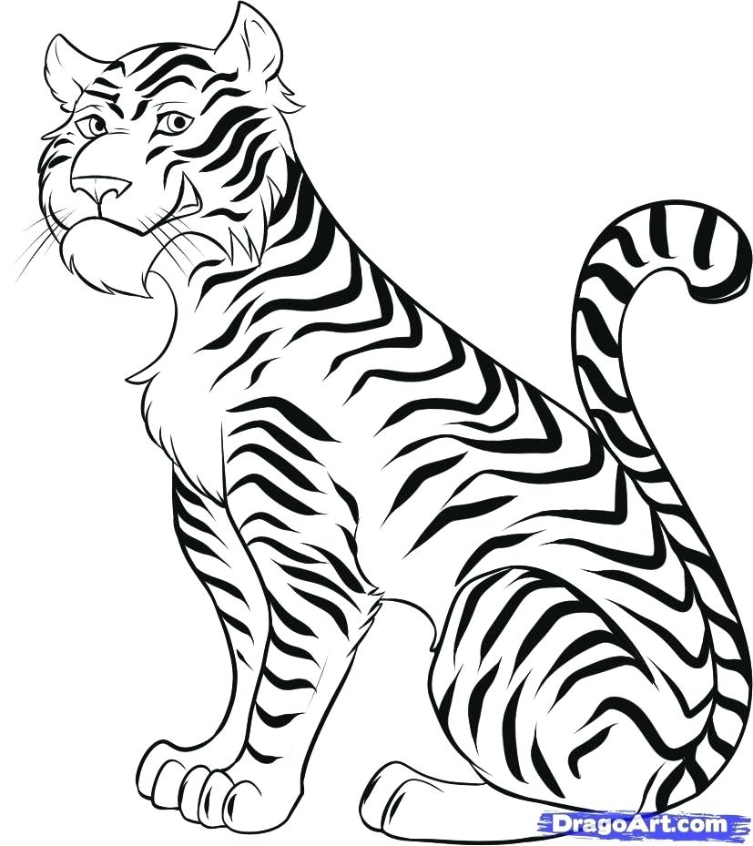 827x929 easy to draw tigers easy drawing of a tiger easy draw tigers