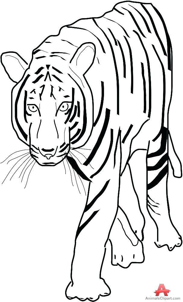 607x999 tiger face outline line drawing of tiger face tiger face outline