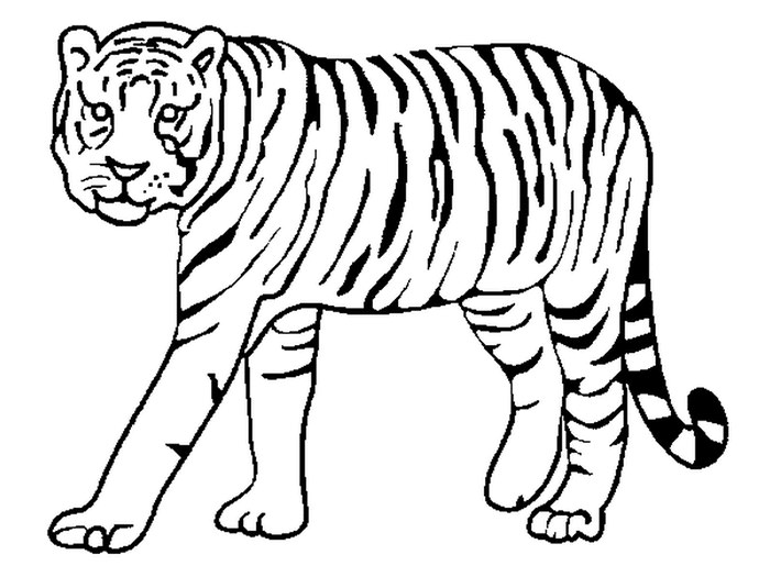 700x525 Tiger Drawing Outline For Free Download