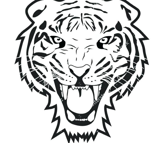 678x600 Tiger Outline Drawing At Free For Personal Use Face Picture
