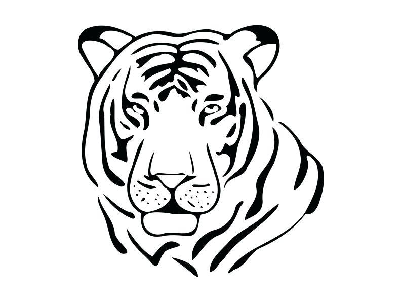 794x596 Tiger Outline Image Tiger Outline Vector Drawing
