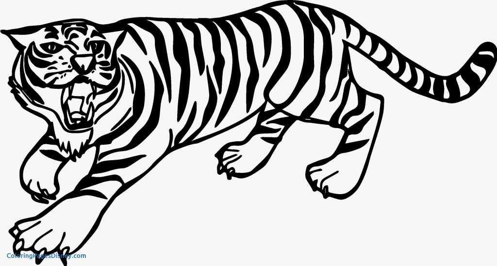 1024x548 Tiger Outline Save Tiger Drawing At Getdrawings