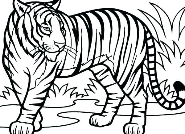 600x434 Tiger Outline Tiger Tiger Face Outline Drawing