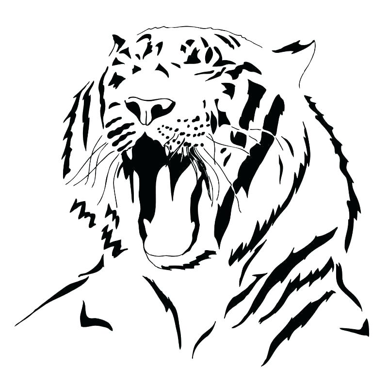 800x790 Tiger Outlines Siberian Tiger Outline Drawing