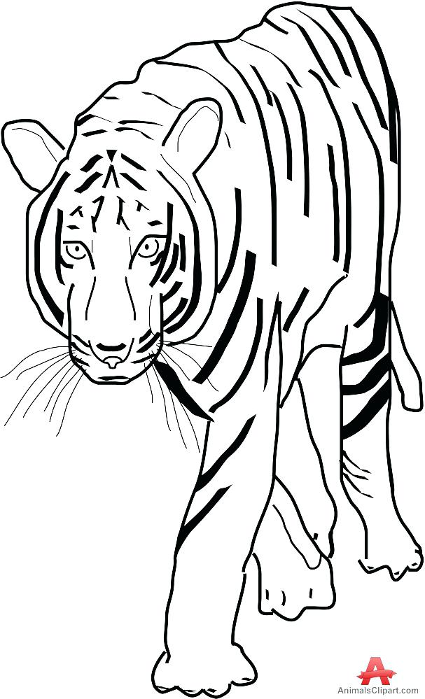 607x999 Vector Art Tiger Lily Flower Outline Drawing Of Sketch Paw Mebelmag