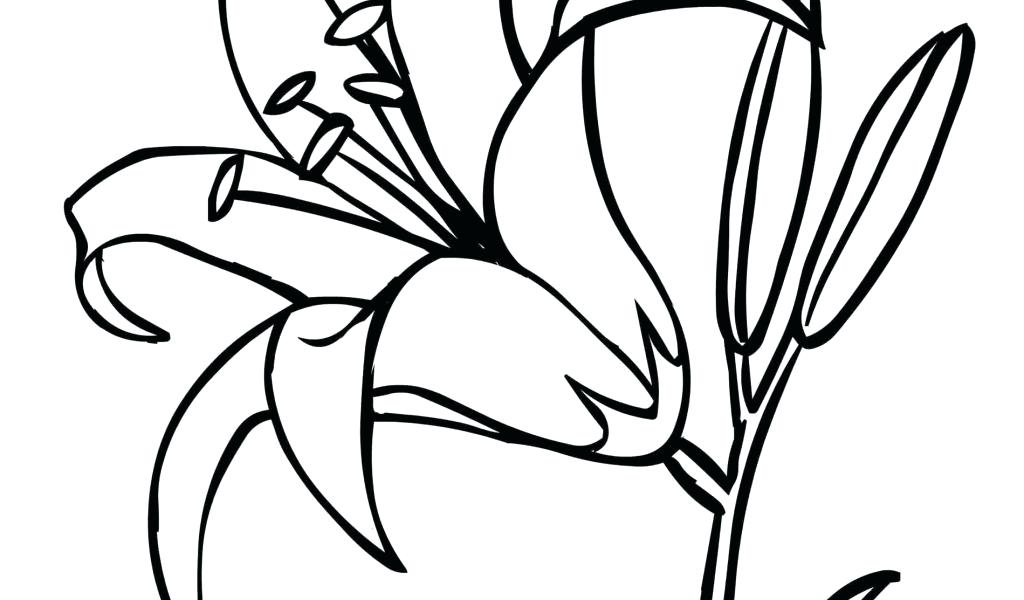 1024x600 Clip Art Of Tiger Lily Flower Outline Search Black Water
