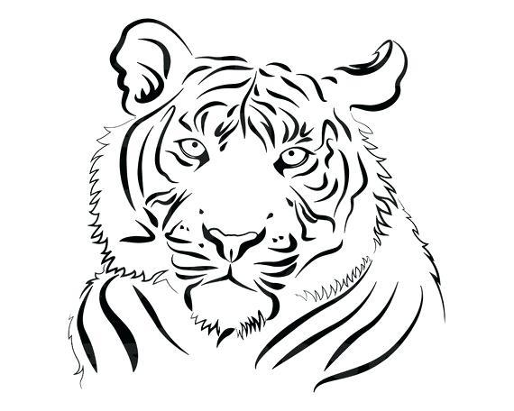 570x456 Outline Of Tiger Image Outline Tiger Images