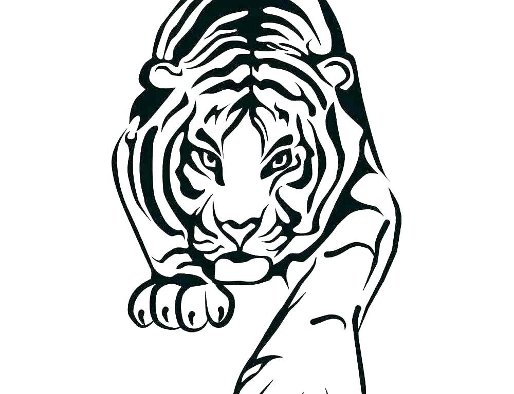 Tiger Face Drawing | Free download best Tiger Face Drawing