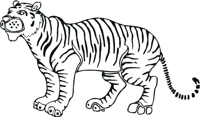 700x408 outline of tiger tiger outlines tiger outline drawing tiger face