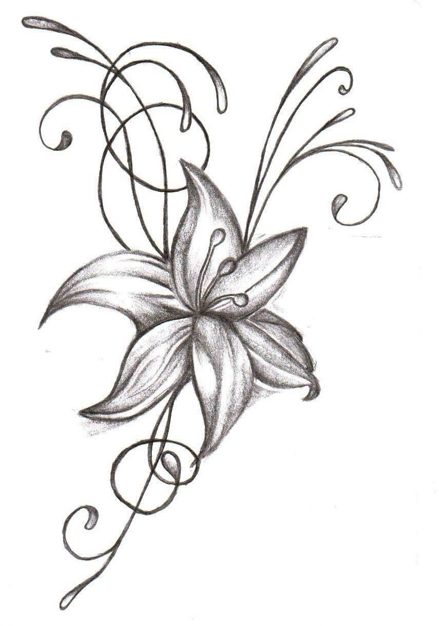 Tiger Lily Flower Drawing Free Download Best Tiger Lily
