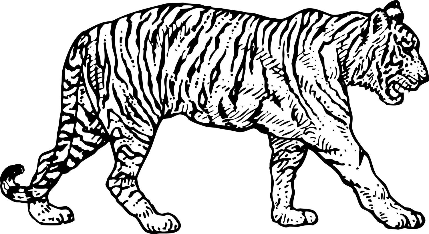 1500x820 Free Coloring Pages Of Baby Colouring Tiger Paw Prints Family