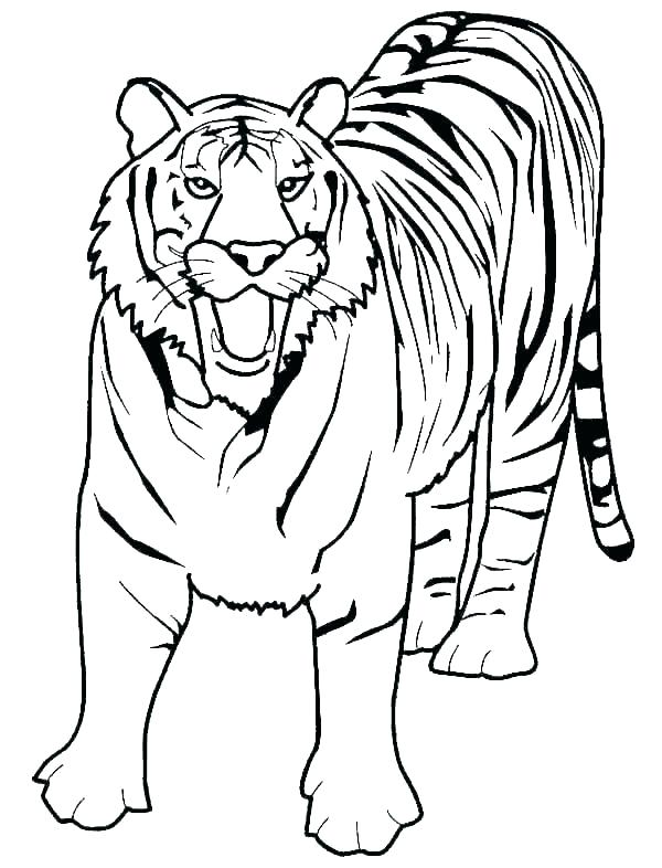 600x786 Pictures Of Tigers To Colour In Tigers Coloring Pages Tiger Paw