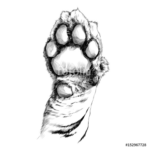 500x500 Tiger Paw Pads Sketch Vector Graphics Black And White Drawing